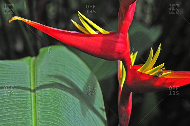 Close up of a blooming crane flower