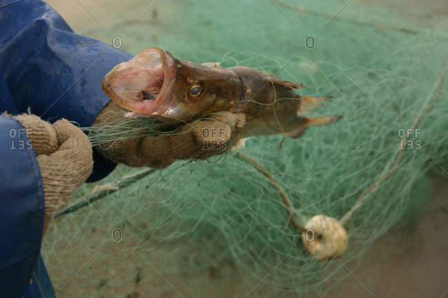 Fisherman holding a fish in a net