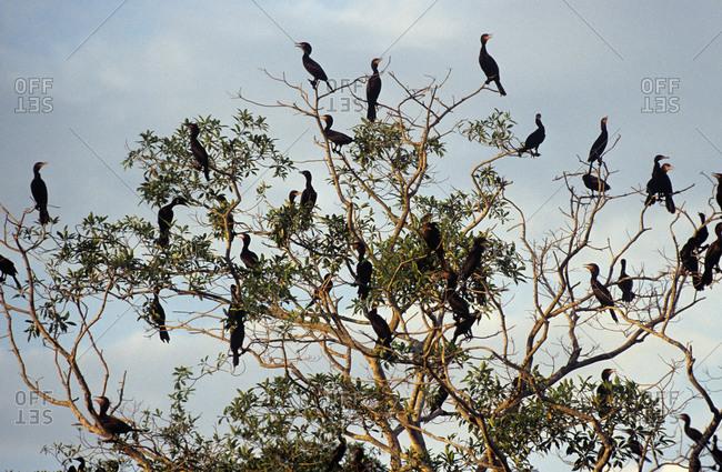 Flock of birds on a tree