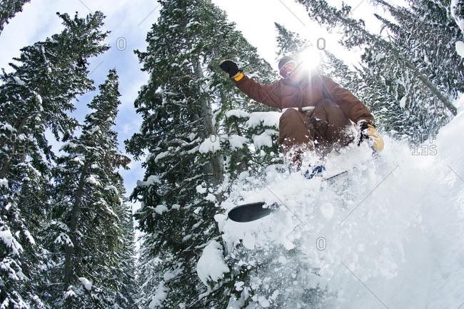 Man Snowboarding Through Pine Trees