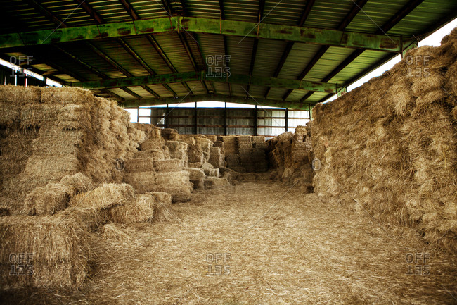 Bales of hay stored in a barn