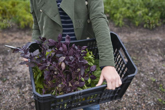 Woman carrying basket with landscaping plants