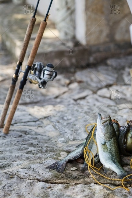 Fishing rod next to the daily catch