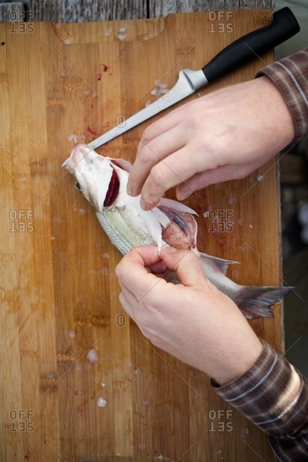 Man gutting a small fish