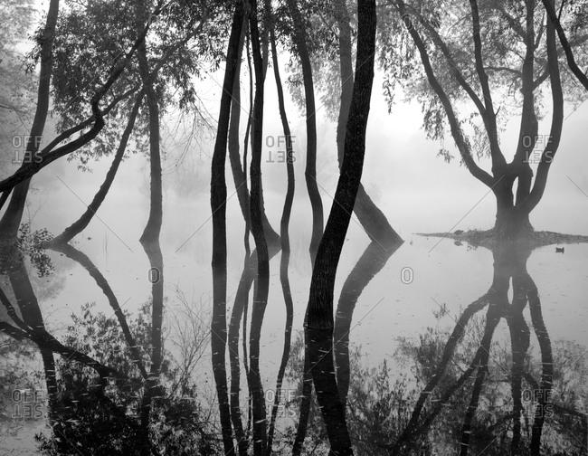 Bare trees at lakeside