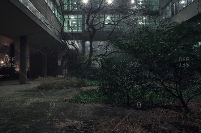 Trees growing in a courtyard