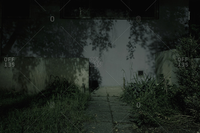 Plants in front of a building at night