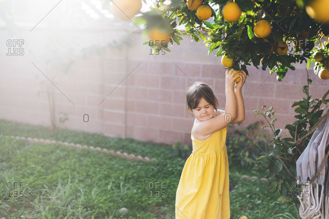 Girl pulling an orange off a tree
