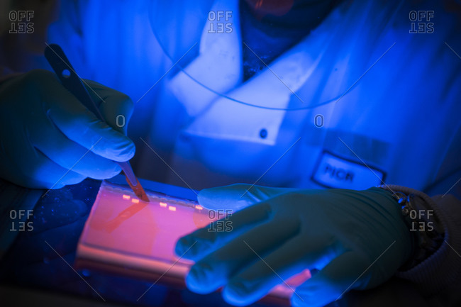 A scientist cutting into DNA samples on an ultraviolet lightbox