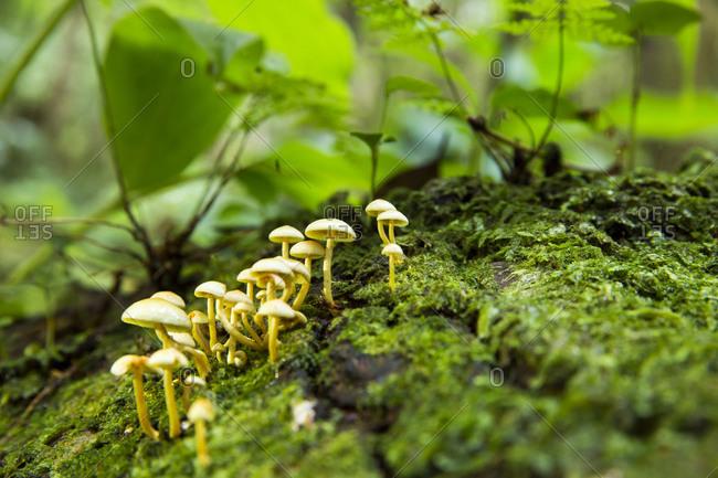 Fungi in Pico forests, Azores, Portugal