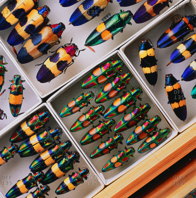 Colorful beetle collection