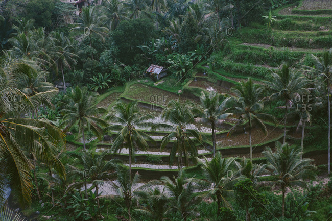 Farm in Bali, Indonesia with steppes