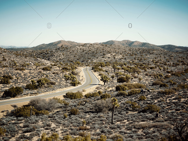 Road running through Joshua Tree National Park