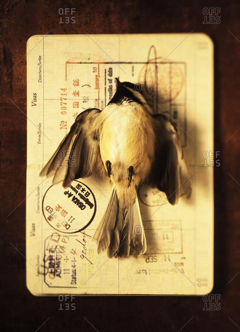 Dead bird on passport - Offset