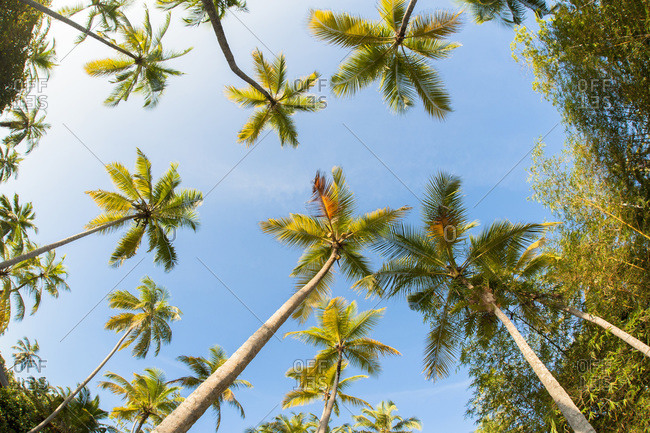 Wide angle view of palm trees against blue sky