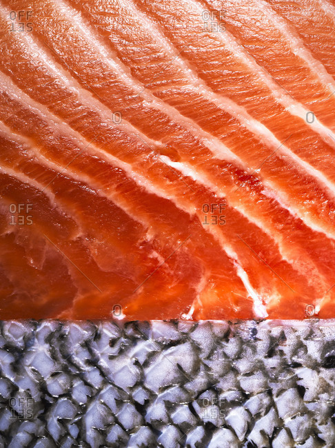 Salmon meat and scales