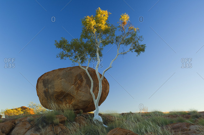 Tree and a boulder in the Northern Territory, Australia