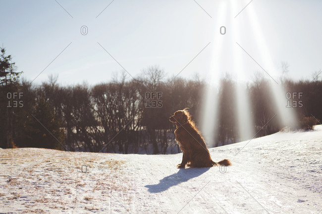Dog sitting in snowy field during winter