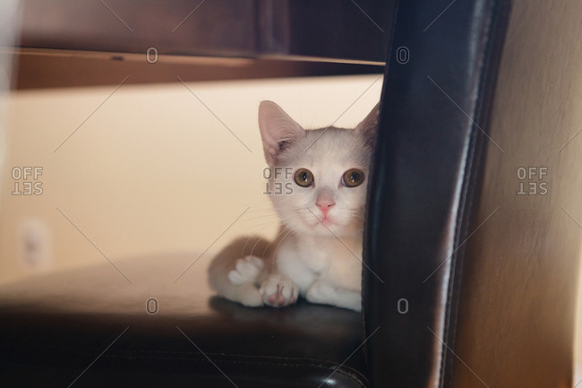 Wide eyed cat sitting on dining chair