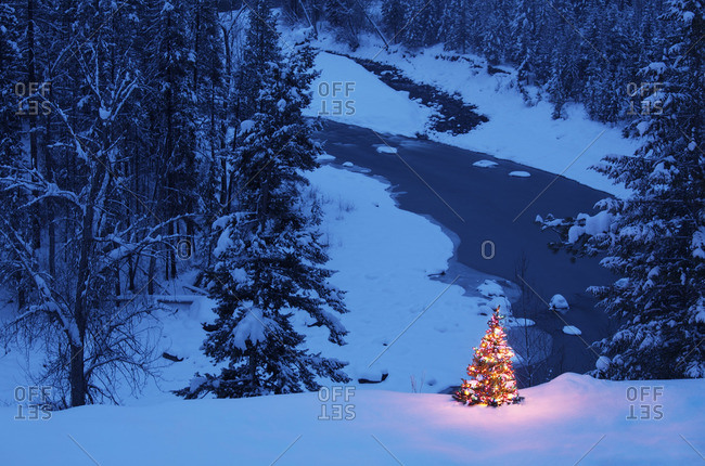 Christmas tree outdoors - Offset Collection