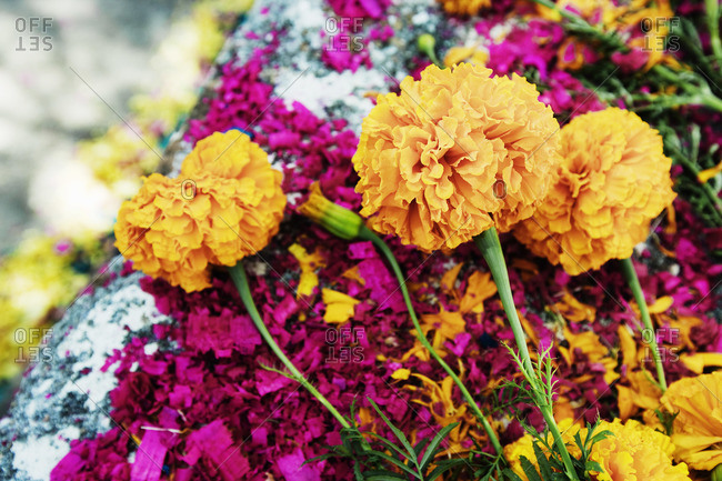 Close-up of flowers and dyed wood shavings on grave, San Miguel de Allende, Mexico