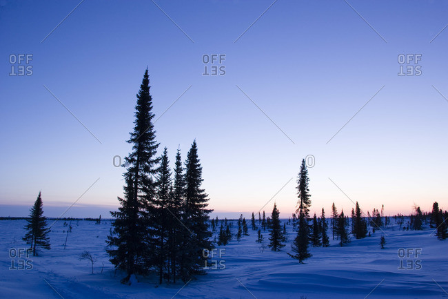Boreal Forest, Fir Trees, Wapusk National Park, Manitoba, Canada