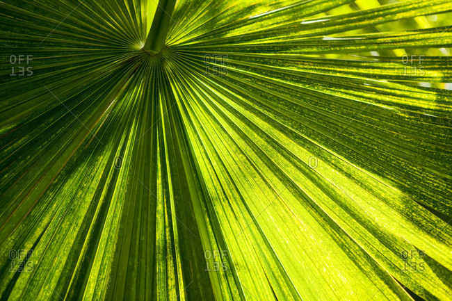 A tropical leaf filtering sunlight