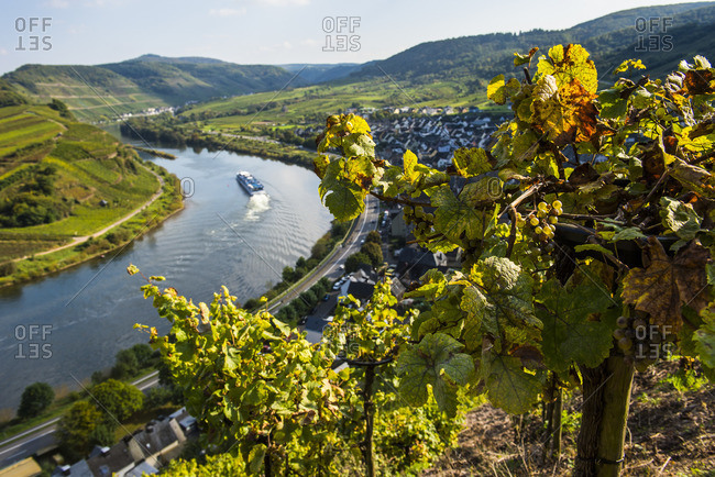 Cruise ship at the Moselle River bend at Bremm seen through the vineyards, Moselle Valley, Rhineland-Palatinate, Germany