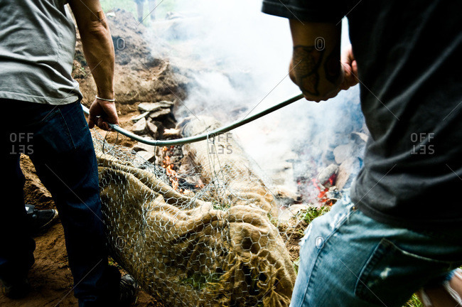 People placing whole pig into barbecue pit in ground