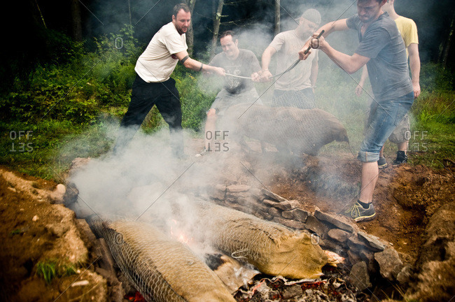 Narrowsburg, NY, USA - August 10, 2012: People placing whole pigs into barbecue pit in ground at the Pig Mountain festival