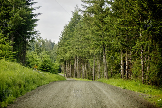 Empty road in a forest