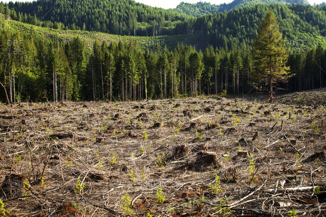 View of a deforested area