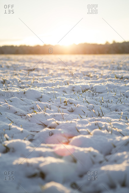 Field landscape covered with first snow