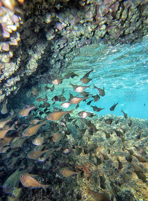 Group of tropical fish swimming beneath a cave, Malaysia