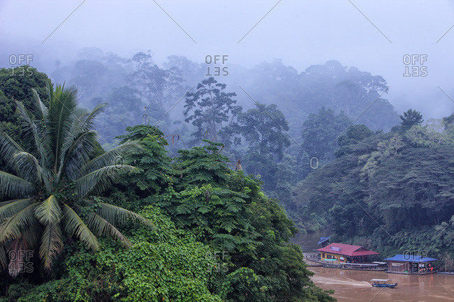 Jungle at Sungai Tembeling, Malaysia