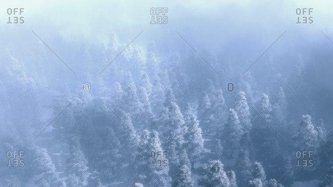 Misty pine forest with winter snow