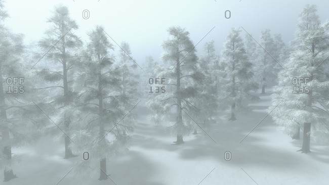 Cold winter landscape with snow covered evergreen trees