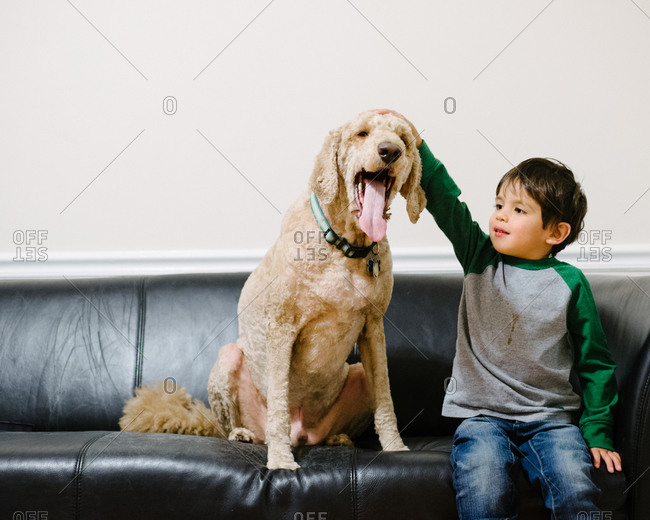 Young boy petting a dog on a couch