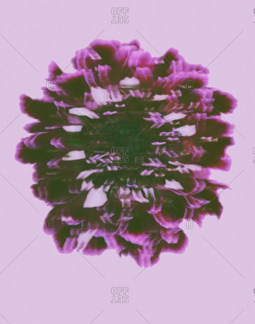 Studio shot of flowers in bloom