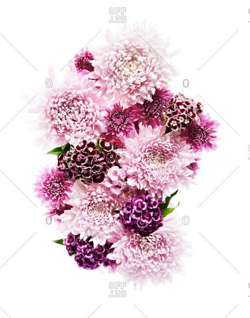 Studio shot of pink flower heads