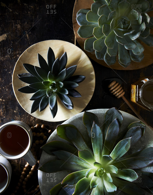 Succulent plant on a tabletop with honey and tea