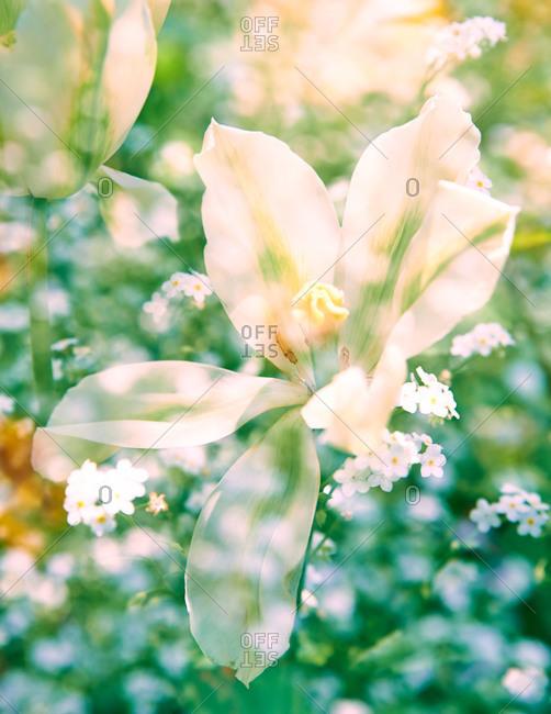 White flowers in full bloom