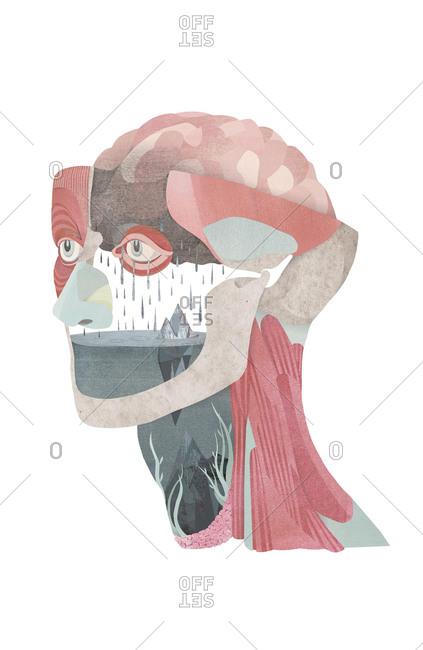 Anatomical illustration of brain with rain