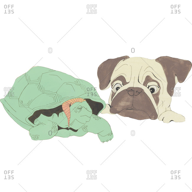 Illustration of turtle with nightcap and puppy