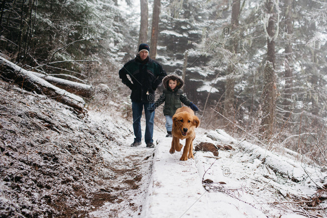 People hiking in a snowy forest with a Golden Retriever