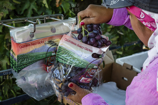 Worker packaging grapes - Offset Collection
