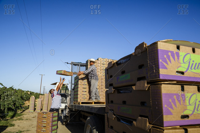 San Joaquin valley, California, USA - August 18, 2014: Workers loading truck with boxes of grapes in San Joaquin valley, California, USA
