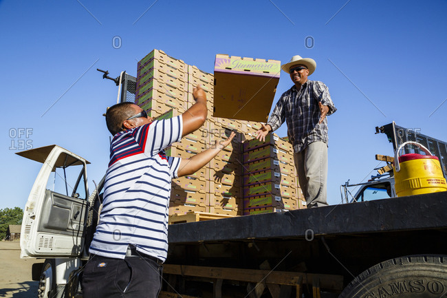 San Joaquin valley, California, USA - August 18, 2014: Workers loading a truck with boxes of grapes, San Joaquin valley, California, USA