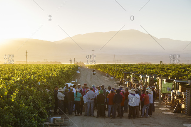 San Joaquin valley, California, USA - August 16, 2014: Group of workers during a briefing at a vineyard