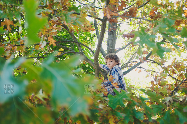 Boy sitting in a tree in solitude in early fall